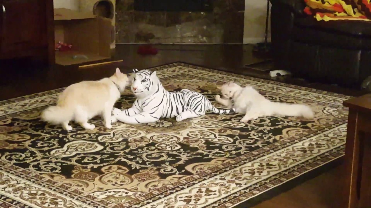 Best Documentaries About House Cats