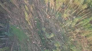 Orkanböen zerstören Wälder