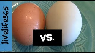 Duck Egg vs. Chicken Egg