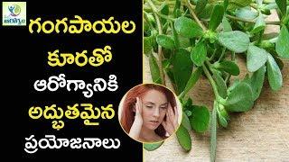 Health Benefits of Gangavalli kura  Purslane - Mana Arogyam Telugu Health Tips
