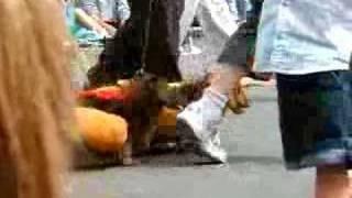 daschunds at the pet parade