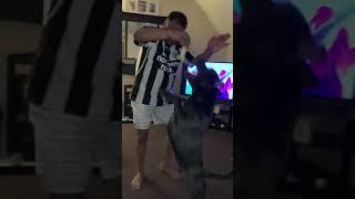 Dancing staffie