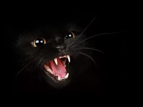 кошка вампир