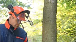 How to work with Chainsaws - Felling Trees (part 2)