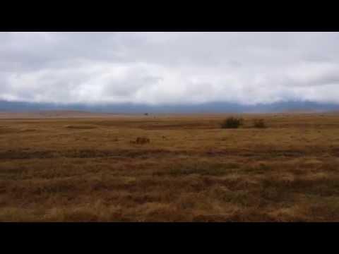 lions family - Ngorongoro Conservation area TANZANIA