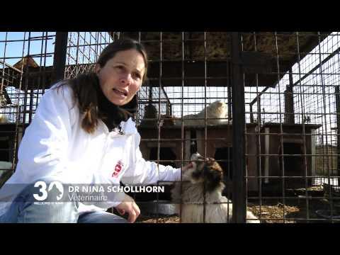 Le combat de Nina pour les chiens de Roumanie