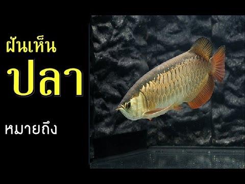 ทำนายฝัน - ฝันเห็นปลา [พร้อมเลขเด็ด]