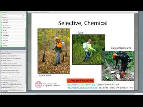Managing invasive forest shrubs, vines, and herbs.