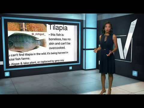VERIFY: Is Tilapia Bad For You?