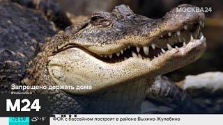 Смотреть видео Почему москвичи заводят крокодилов, а потом выбрасывают их на улицу - Москва 24 онлайн