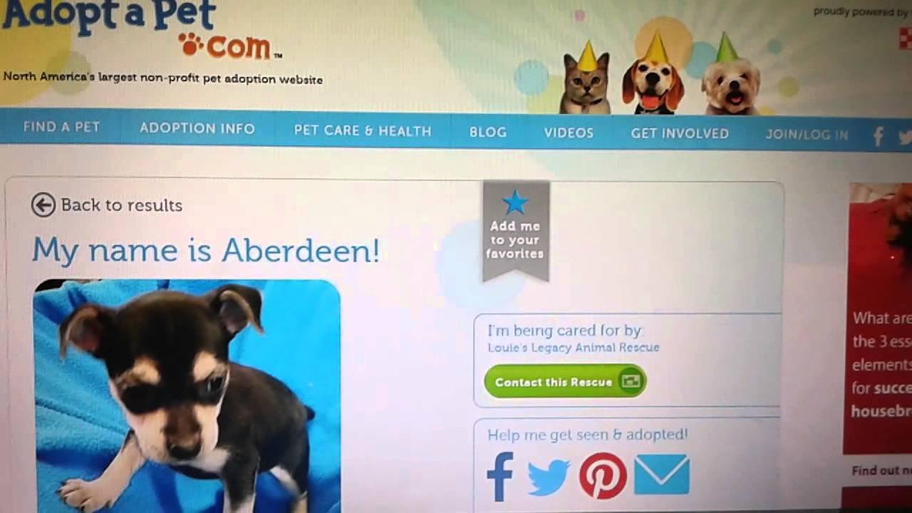 How To Adopt A Rescue Pet line