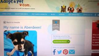 How To Adopt A Rescue Pet Online
