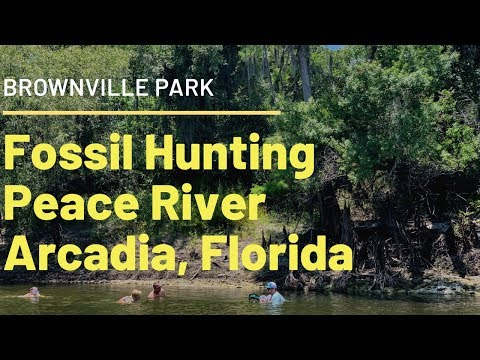 Fossil Hunting On Peace River: Brownville Park