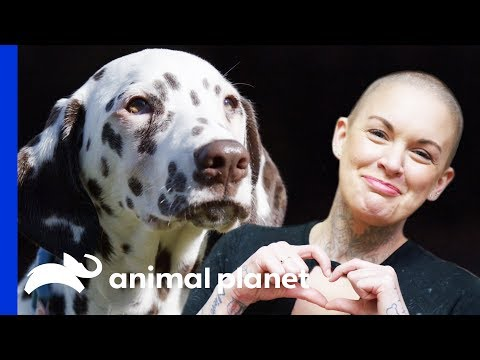 Dalmatian Pup Hits The Jackpot With A Perfect New Home | Amanda To The Rescue
