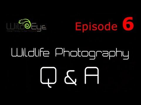 Wildlife Photography Q&A:  Episode 6