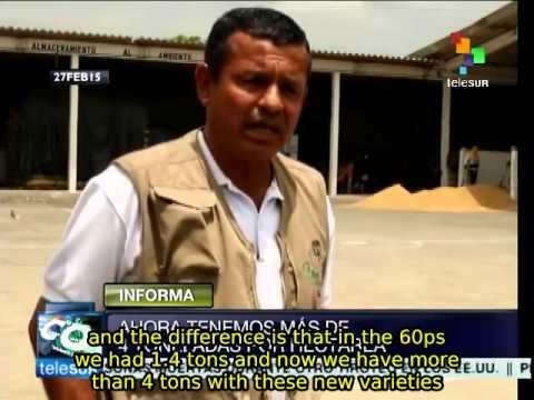 Ecuador Develops Improved Varieties Of Rice