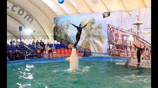 Шоу дельфинов - Мир дельфинов. #ДельфинШоуВолгоград