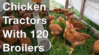 Chicken Tractors Hold 120 Broilers