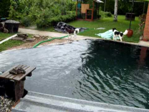Ampliamento laghetto carpe koi nel giardino di casa 3 for La casa nel laghetto