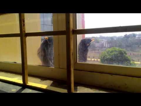 Bird View : NUSRL Ranchi