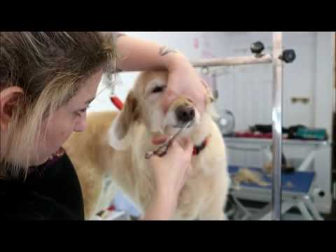 HOW TO GROOM A LABRADOODLE | Best Dog Grooming Tips