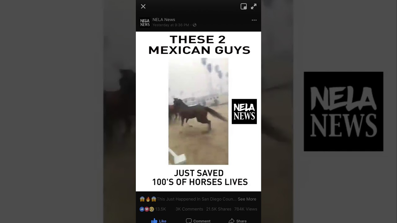 2 Brave Latinos SAVED HUNDREDS Of Horses From The California Wild Fire !!🐎🐎