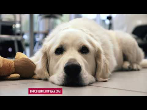 5-Star Experience with Bentley I Bruce Bennett Nissan TV Commercial