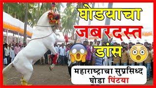 घोड्याचा जबरदस्त डांस | महाराष्ट्राचा सुप्रसिद्ध घोडा पिंट्या | Horse Dance