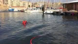 Une baleine coincée dans le Vieux-Port de Marseille secourue