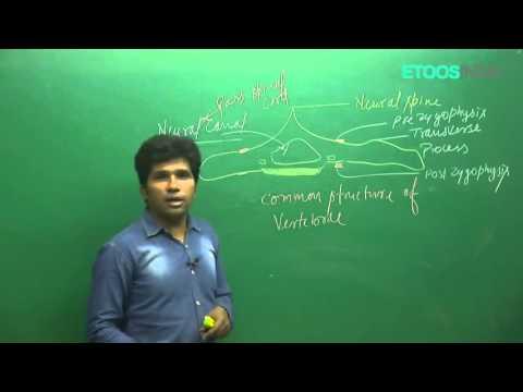 Locomotion and Movement by M. Asad Qureshi (MAQ) Sir (ETOOSINDIA.COM) thumbnail