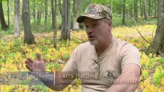 Hardings Wild Mountain Herbs/Hardings Ginseng Farm (Maryland Farm and Harvest 310)