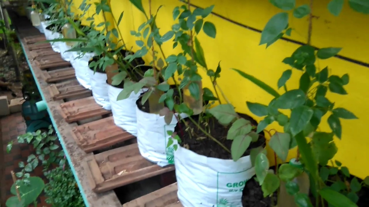 variety terrace farming on sunshade youtube On terrace krishi in malayalam