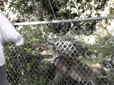 Baby Deer Gets Stuck In Our Fence Youtube