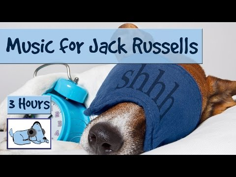 Music for Jack Russells. Keep them Calm, Prevent Barking and Biting! 🐶 #TERRIER01