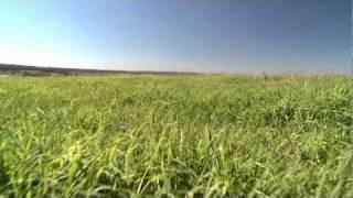 Feno Santa Helena - Novo vídeo