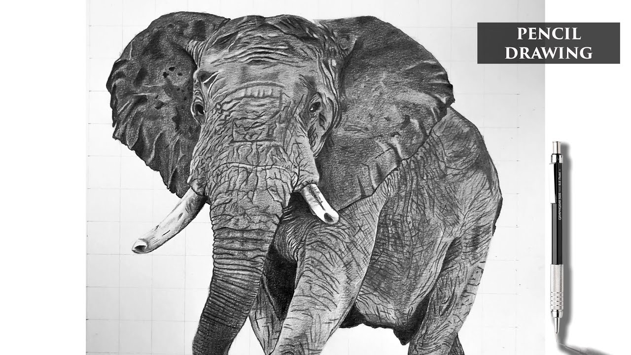 Realistic pencil drawing of an Elephant - Speed Drawing ... Realistic Elephant Drawing