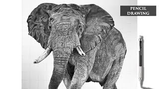 Realistic pencil drawing of an Elephant - Speed Drawing - How to draw a realistic elephant.