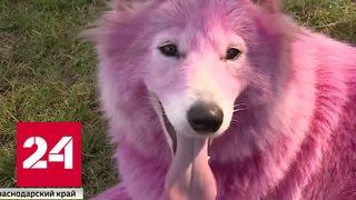 Собак для платных фотосессий бросили умирать в лесу