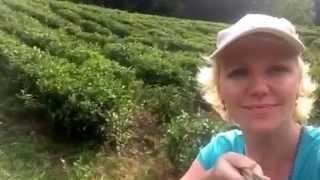 видео Курорты чая и лотоса: Индия и Шри-Ланка
