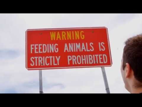 Don't Feed the Animals!