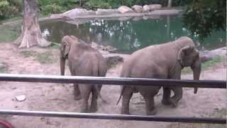 The Bronx Zoo- July 19th, 2012: Wild Asia Monorail- Patty and Maxine the Asian Elephants