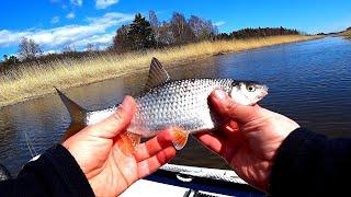 Летняя рыбалка За Плотвой вот так мега Улов