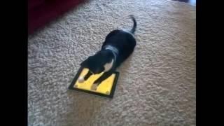 Коты играют в игры на смартфонах и планшетах.