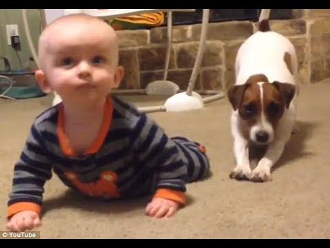 Jack Russell Terrier Tries to make Baby laugh Fantastic Video !Dogs With babies
