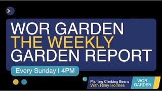 WOR GARDEN - The Weekly Garden Report - Episode 8 Planting Climbing Beans