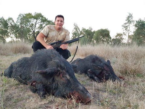 Pig Hunting Australia QLD