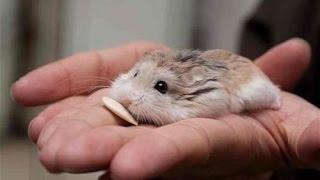 hamster yavruları ve balık son durum