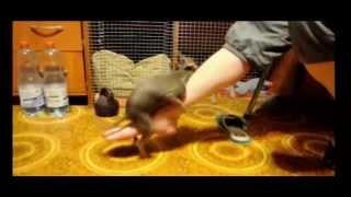Cute Psycho Dog Loves Human Leg - |pretty Animals Cute Dogs|