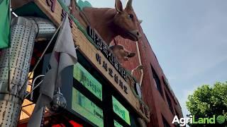 马场肉类市场-韩国牛肉和猪肉中心