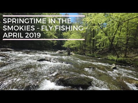 Springtime In The Smoky Mountains - Fly Fishing Little River And The West Prong - April 2019